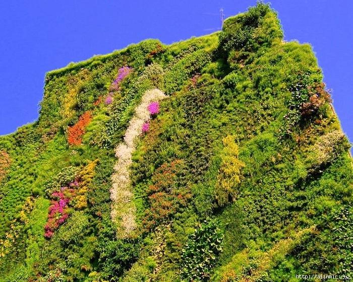 Живые стены Патрика Бланка16 (700x560, 483Kb)