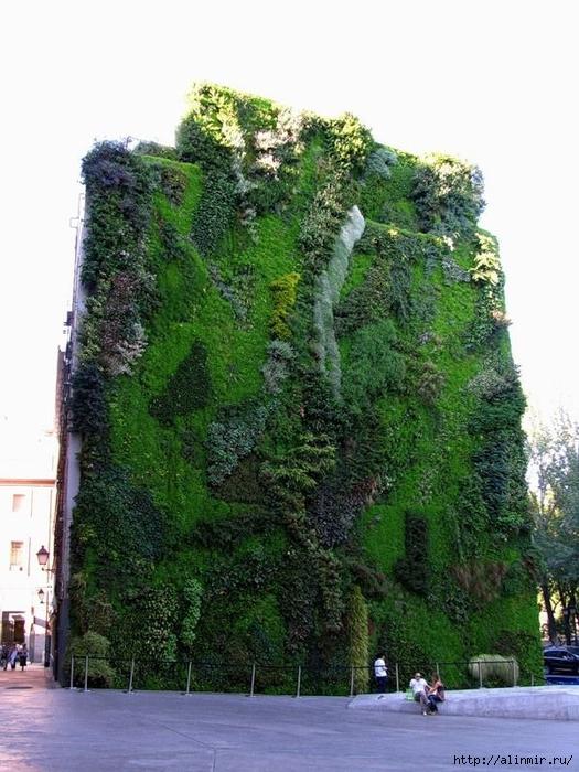 Живые стены Патрика Бланка14 (525x700, 296Kb)