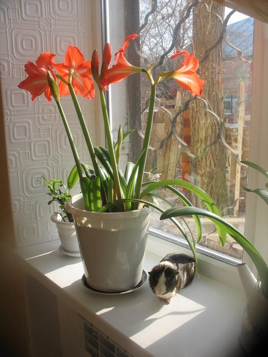 цветок 004 (525x700, 109Kb)