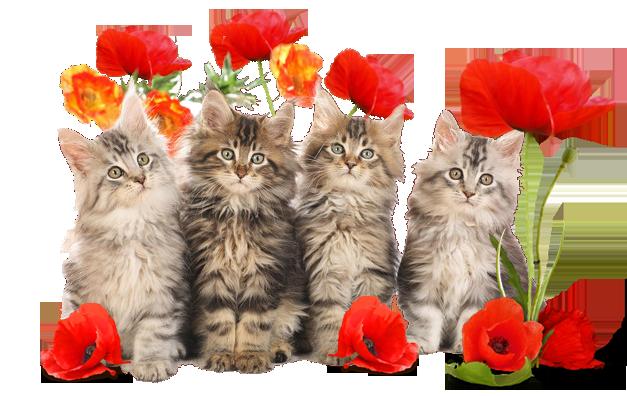 Поздравление с днем кошек