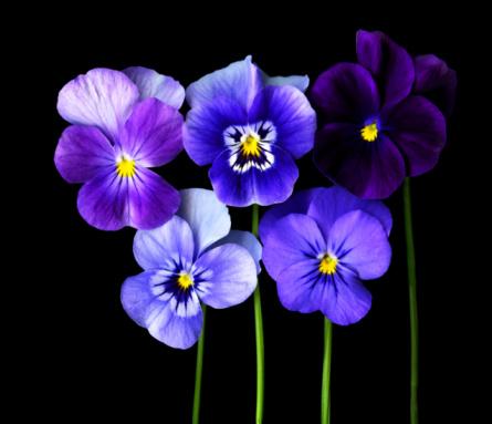 цветы 14 (445x383, 114Kb)
