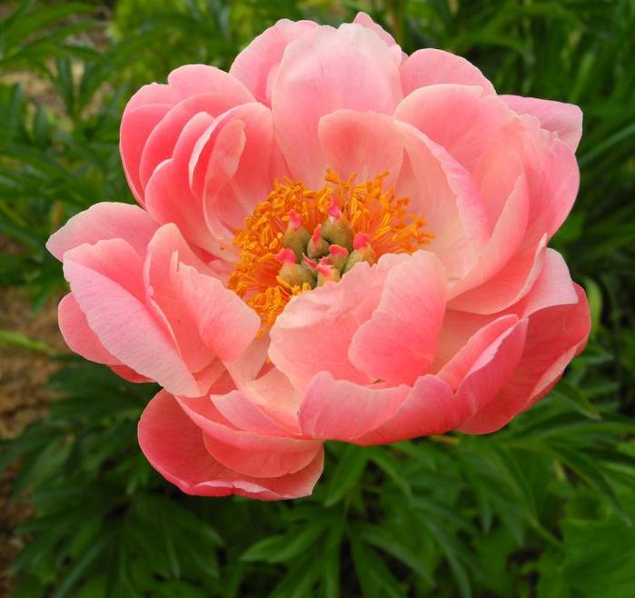 цветЫ 12 (700x658, 420Kb)
