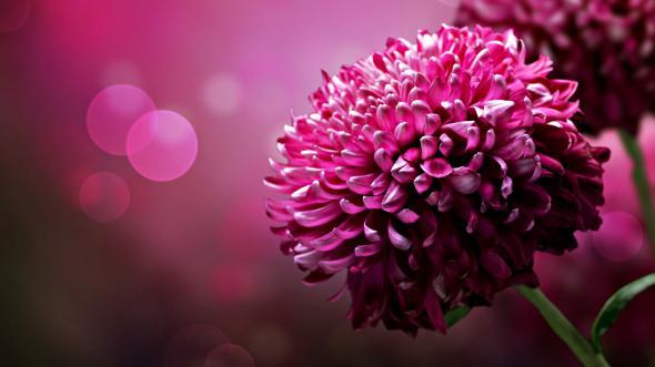 цветы 7 (590x331, 151Kb)