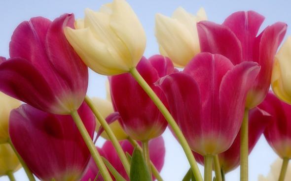 цветы 3 (590x368, 155Kb)