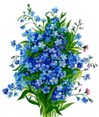 Как нарисовать хризантему букет хризантем поэтапно