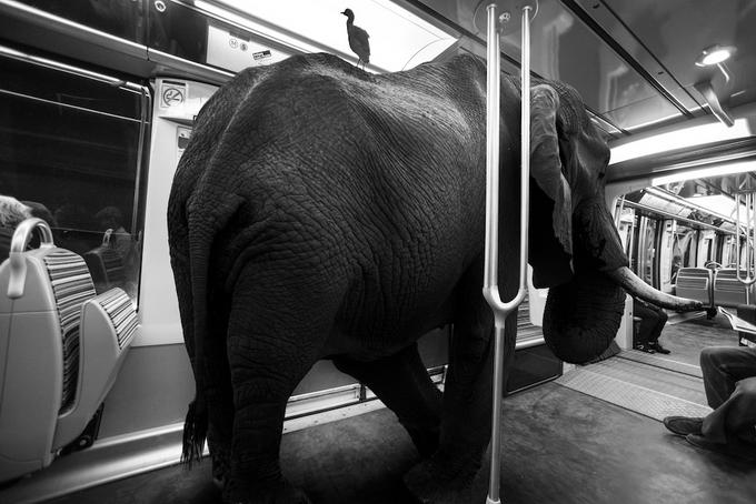 черно белые фото животных 2 (680x454, 215Kb)