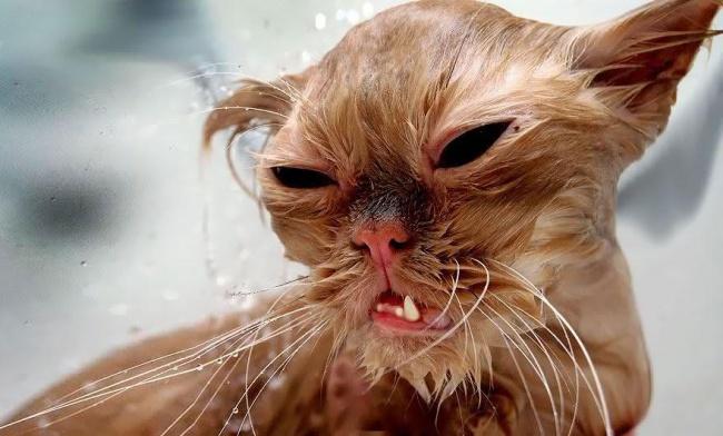 мокрые кошки фото 6 (650x392, 225Kb)