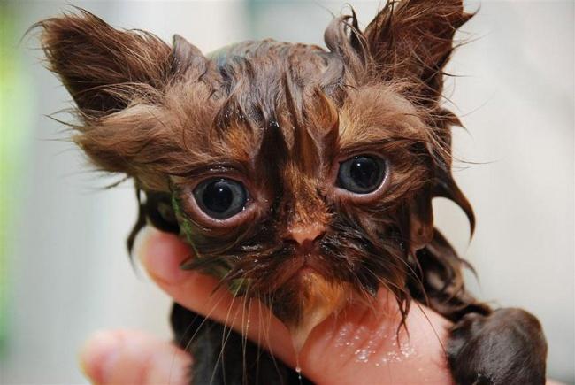 мокрые кошки фото 10 (650x435, 232Kb)