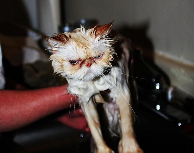 мокрые кошки фото 12 (650x514, 205Kb)