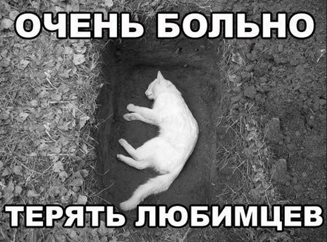 Смерть кота фото
