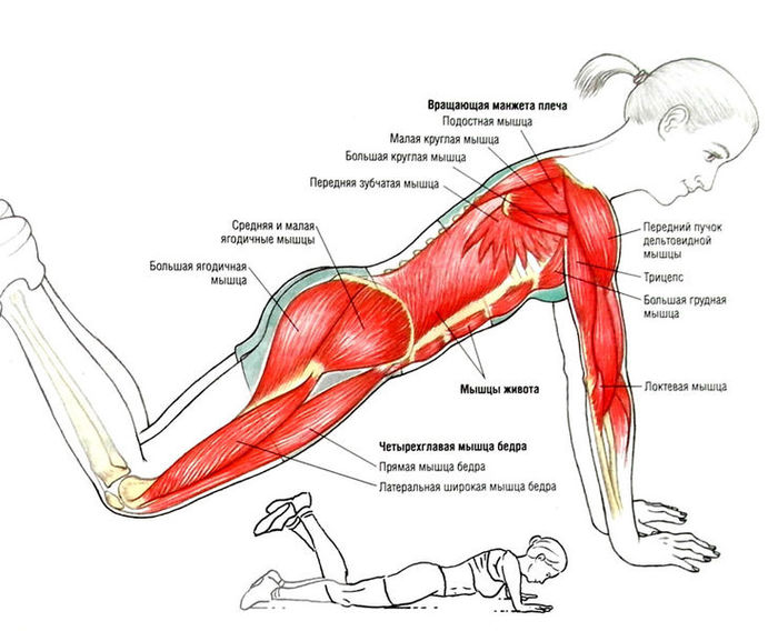 Упражнения на грудную мышцу в домашних условиях для женщин