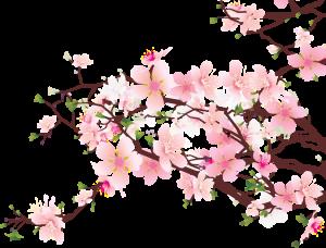 cherry-blossom-clip-art-300x228 (300x228, 85Kb)