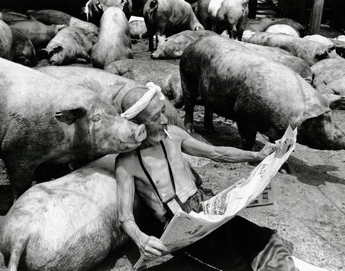 смешные свинки фото 7 (680x534, 190Kb)