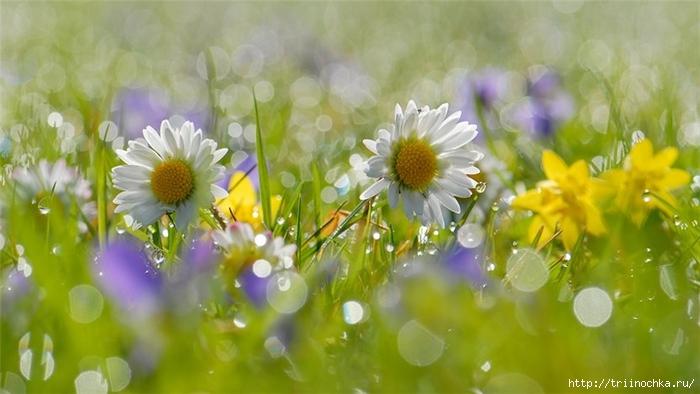 Я хотела бы нежность, как каплю росы на ладони тебе подарить...