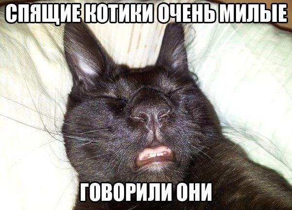 smeshnie_kartinki_139791499070 (600x433, 217Kb)