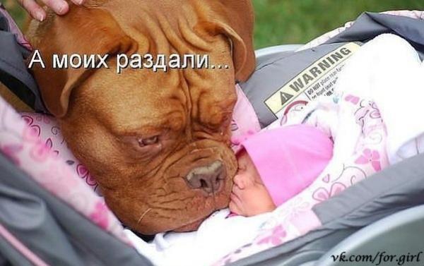 smeshnie_kartinki_1361964404270220132507 (600x377, 167Kb)