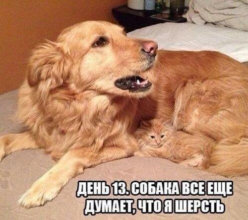 1397716406_kartinki-43 (500x443, 187Kb)