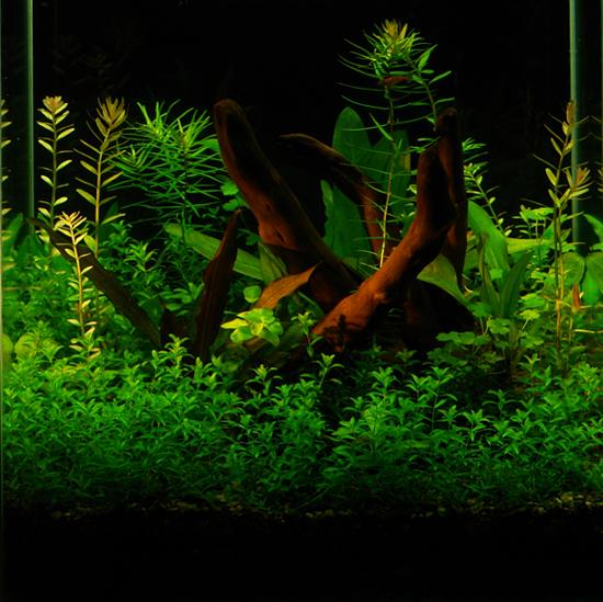 Углекислый газ в аквариуме.