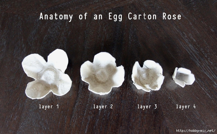 egg carton roses - anatomy (700x433, 261Kb)