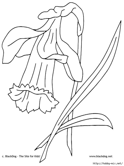 flower07 (525x700, 129Kb)