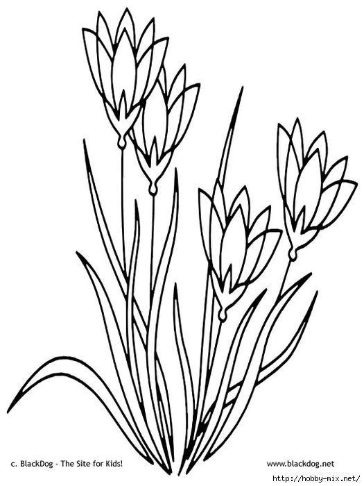 flower08 (525x700, 151Kb)