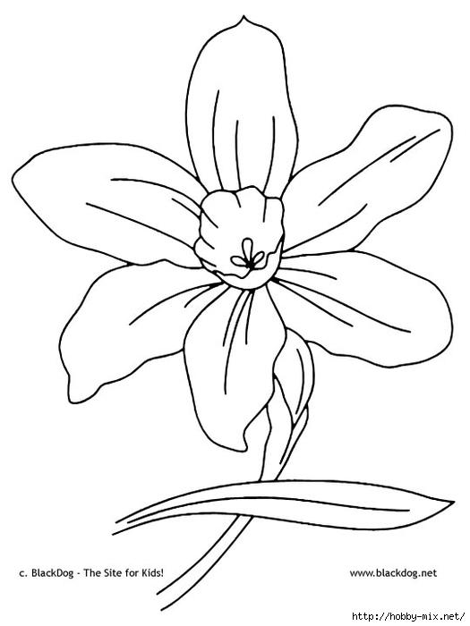 flower02 (525x700, 109Kb)