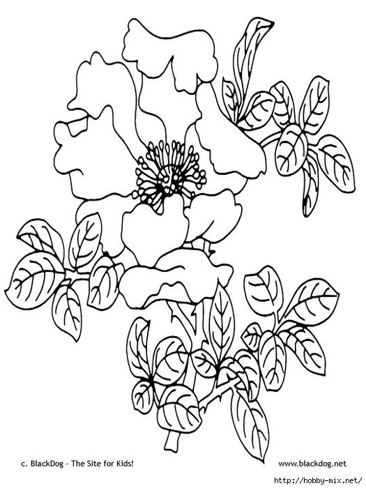flower11 (525x700, 184Kb)