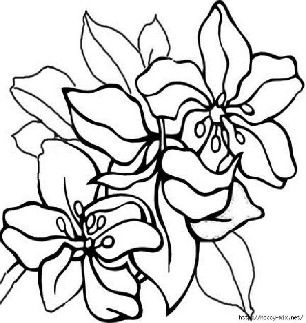 flower-coloring-pages-for-adults (600x634, 218Kb)