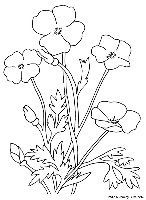 blank-poppy-flowers-coloring-sheets (511x700, 154Kb)
