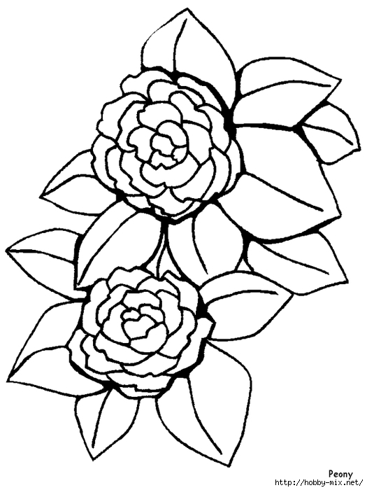 peony-flowers-coloring-pages (525x700, 154Kb)