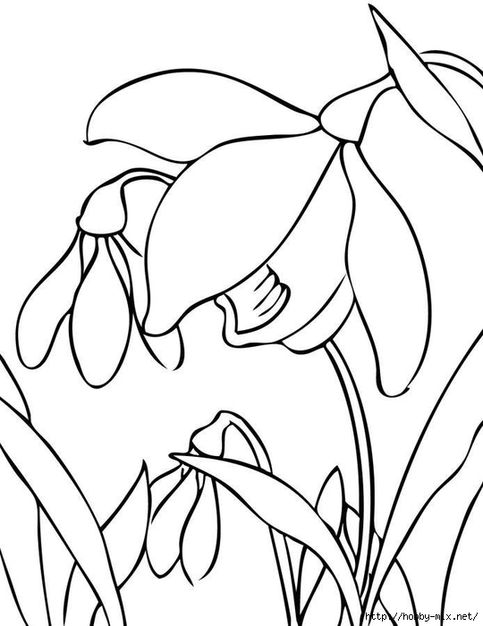 high-resolution-print-printable-spring-flower-coloring-pages-best-resolution (540x700, 145Kb)