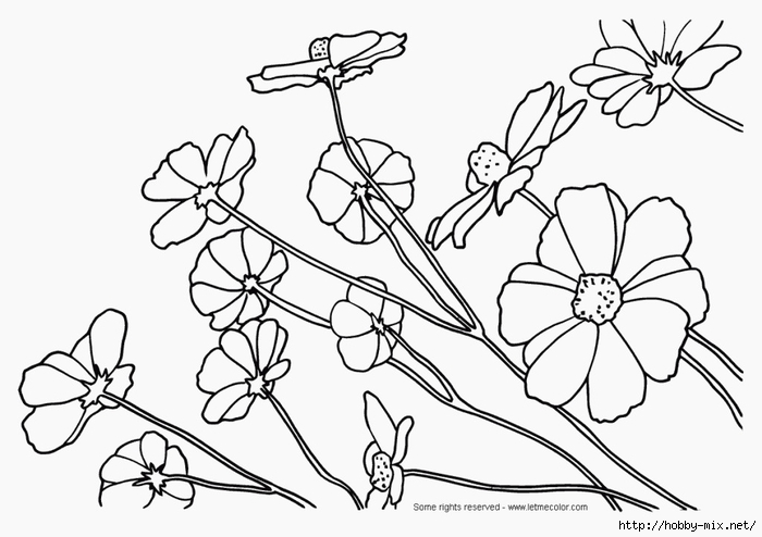 flower-coloring--printable-sheets-1024x723 (700x494, 161Kb)