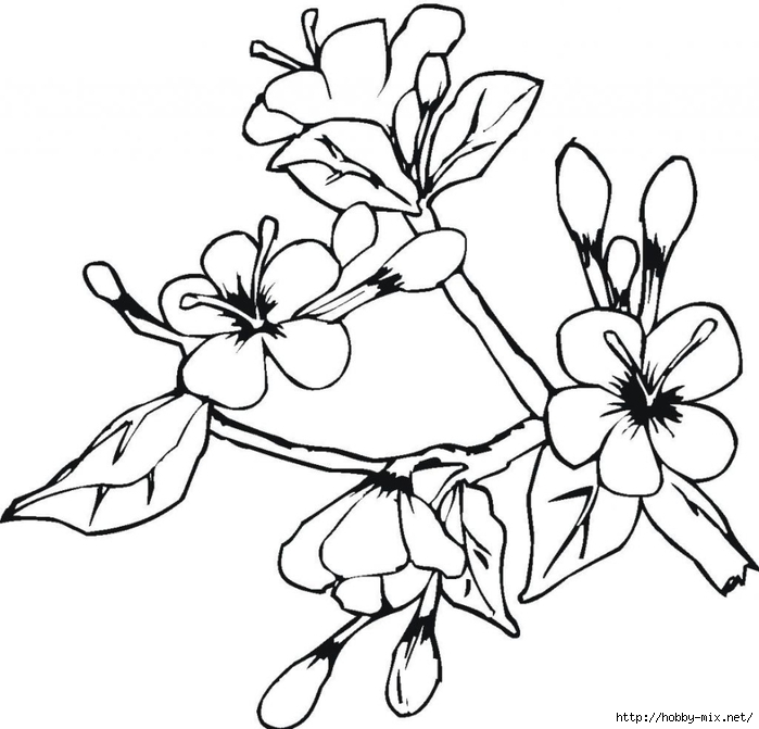 blank-easter-spring-flowers-coloring-pages (700x671, 182Kb)