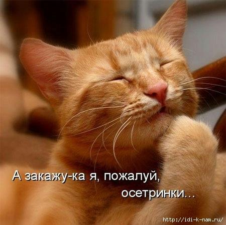 прикольные коты, демотиватор с котами, смешные коты на фото, фото с милыми смешными котами, http://idi-k-nam.ru/profile