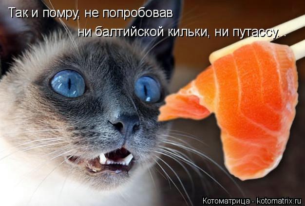 kotomatritsa__L (626x423, 116Kb)