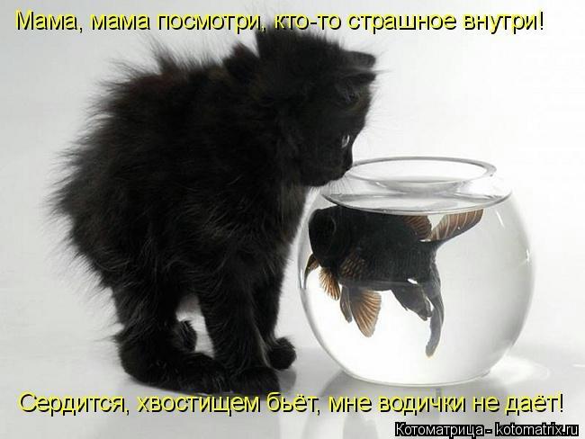 kotomatritsa_96 (650x488, 104Kb)