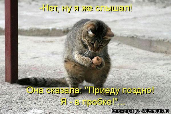 kotomatritsa_ix (599x399, 126Kb)
