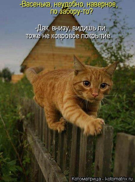 kotomatritsa_Up (449x604, 123Kb)