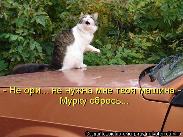 kotomatritsa_y- (600x450, 147Kb)