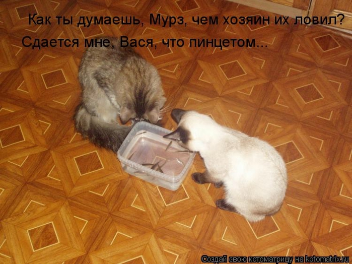 kotomatritsa_yU (700x524, 266Kb)