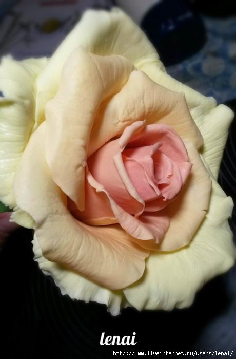 роза.jpg1 (460x700, 164Kb)