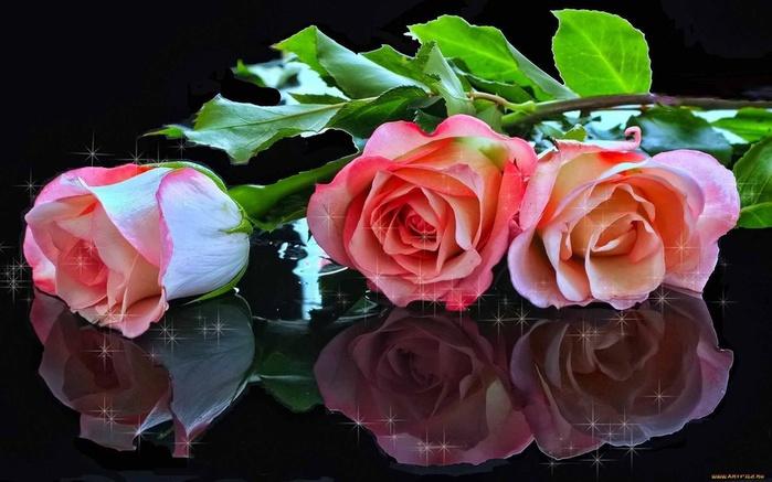 розы лежа! (50x20, 111Kb)