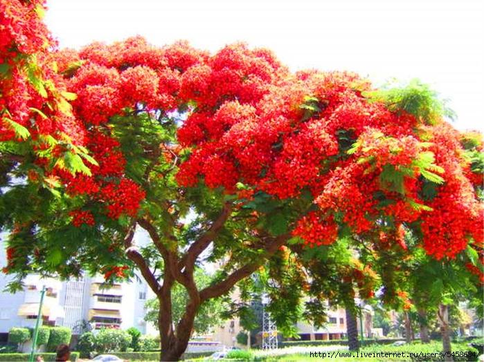 Большие деревья  с цветами 54