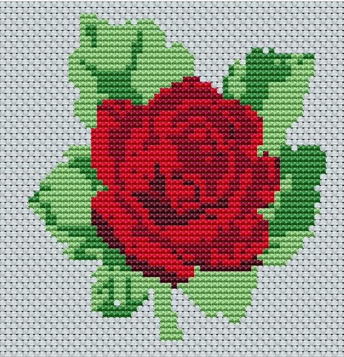 бордовая роза (675x700, 710Kb)