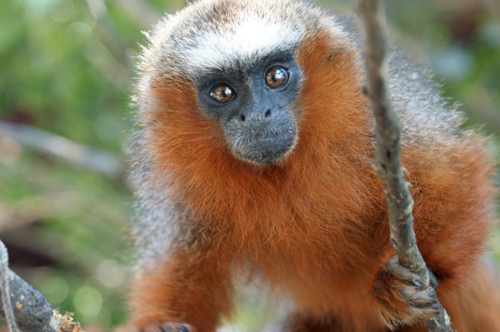 monkey2016 (700x466, 244Kb)