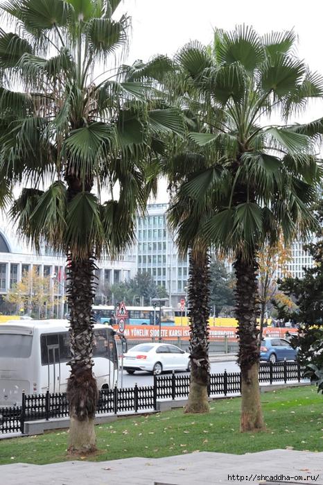 Стамбул (58) (466x700, 353Kb)