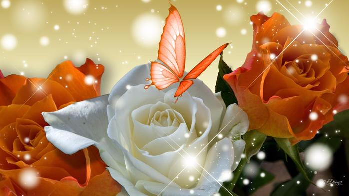 Роза с капельками росы и дождя2а-1 (700x393, 287Kb)