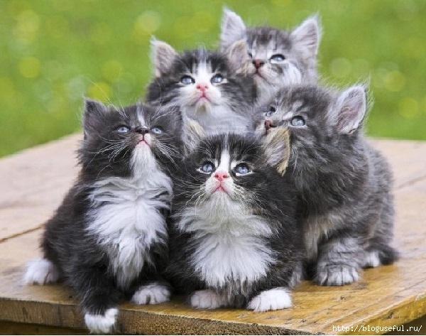 кошки (600x473, 186Kb)