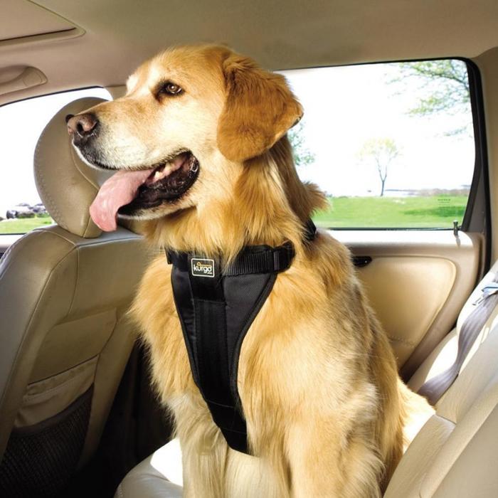 3509984_seatbelt (700x700, 295Kb)