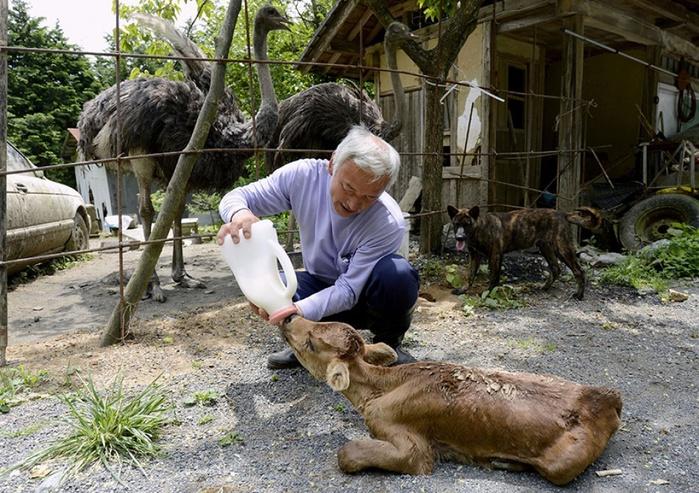 5357510-1000-1450451677-fukushima-radioactive-disaster-abandoned-animal-guardian-naoto-matsumura-13 (700x493, 201Kb)